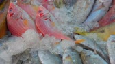 ahtapot : Different kinds of fish lie in the showcase of the fish market Stok Video