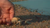 застенчивый : A hermit crab runs from the palm to the sand