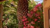 garnek : Palm trees and blooming shrub of red oleander grows against the bright sunny sky
