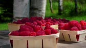 malina : Three baskets of ripe raspberries stand on a wooden table outdoors against the background of birch trees Wideo