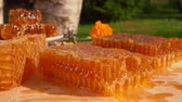 mead : Honey comb lies on a wooden table against the background of birches on a sunny summer day. Bee flies over honeycombs on a wooden table. Circular camera movement. Stock Footage