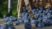 Slow motion Blueberries get enough sleep from a basket on a wooden table and roll towards the camera