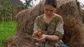 volaille : Little chicken sits on the hands of a farmgirl on a background of haystacks. Vidéos Libres De Droits