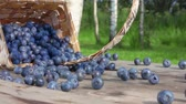 panier : Slow motion Blueberries get enough sleep from a basket on a wooden table and roll towards the camera