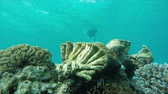 aquático : Diver swimming to a coral reef with tropical fish Stock Footage