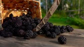 deserto : Basket with ripe blackberry falls on a wooden table. Berries fall on the table. Slow motion outdoors against birch