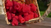 mand : Ripe raspberries fall from the basket onto a wooden table surface on the background a green lawn Stockvideo