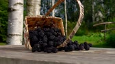 deserto : Blackberry berries get enough sleep from a basket of birch bark for on a wooden table