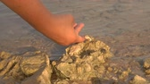 aquático : Hand takes off a small hermit crab on a sea stone in the water