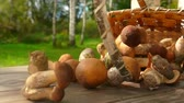 mushroom growing : Delicious freshly picked mushrooms fall from a basket on a wooden table and roll on camera