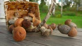 продукты питания : Freshly picked mushrooms fall out of a birch basket on a wooden table and roll forward