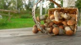 jedlý : Delicious freshly picked mushrooms fall from a birch basket on a wooden table and roll to the camera outdoors