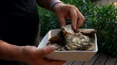 lindenbaum : Man studying freshly caught mediterranean oysters on a white plate Videos