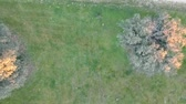 forest drone : aerial view of a park, country house, Madrid