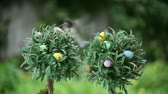 alerta : a lively dark-eyed junco flies in to land on a small tree decorated with miniature Easter eggs Stock Footage