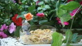 garden flowers : a lively chickadee chirps and calls before getting food  Stock Footage