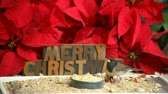 tipo de letra : a songbird eats at a feeder with bright red poinsettias and the words Merry Christmas in the background