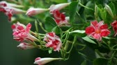 wzrost : tropical flowers in profuse bloom