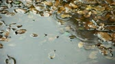 звук : puddle with oak leaves and rain drops with ripples