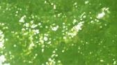oak : background of oak leaves with soft focus