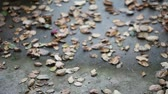 halott : fallen leaves blown about on a windy day