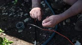 rubber tubing : Older man punches hole with tool for backyard emitter irrigation system.