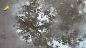 room for text : Tree reflected in a puddle on a concrete patio