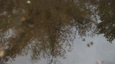 room for text : A redwood tree is reflected in a puddle on a rainy day. Stock Footage