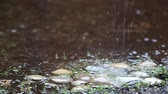 room for text : Closeup of rain on stones placed under a roof gutter Stock Footage