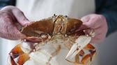 verificar : ook looks over a fresh, live crab