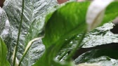 Plant foliage in heavy rain with sound Stok Video