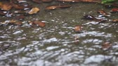 umidade : Steady rainfall makes a backyard puddle