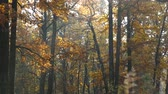 krakow : Autumn in the park. Stock Footage