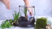 mason jar with plants inside, indoor gardening Do It Yourself, planting greenery