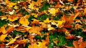 fundo verde : Colourful autumn leaves lying on a grass