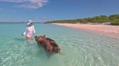 animais selvagens : Woman feeding a wild swimming pigs on Big Majors Cay. Bahamas. Vídeos