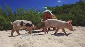 świnia : Wild, swimming pig contact with tourists on Big Majors Cay in Bahamas.