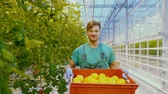 cesta : Young attractive man at work in greenhouse.