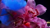 suluboya : Orchid flower and drops of a colourful paint in water