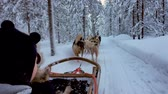 papai noel : Riding husky sledge in Lapland landscape Vídeos