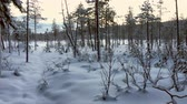магия : Beautiful snowy winter forest in Lapland Стоковые видеозаписи