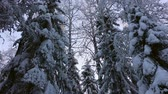 magia : Beautiful snowy winter forest in Lapland Vídeos