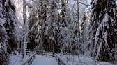 снег : Walking path in beautiful snowy winter forest