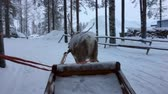 vila : Riding reindeer sleigh in winter landscape