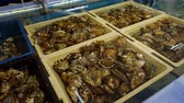 molusco : Oyster farm in France Stock Footage