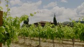 casa de campo : Beautiful vineyard at sunny day