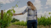uva : Young woman in vineyard Stock Footage