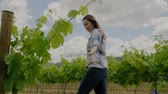 viticultura : Young woman in vineyard Stock Footage
