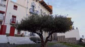 catalão : Beautiful view of olive tree in Cadaques village at evening, Spain