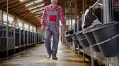 terneros : Farmer in a cowshed on a dairy farm.